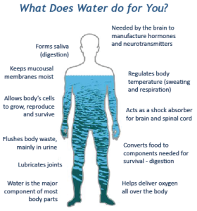 water n human body
