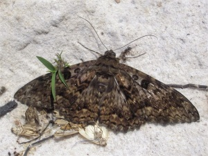 dead moths, green