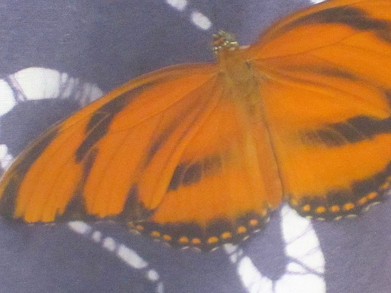 butterfly on batik- open