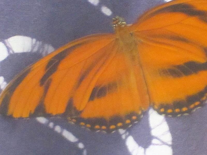 butterfly on batik- open