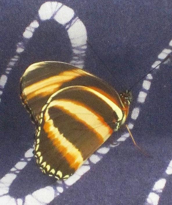 butterfly on batik
