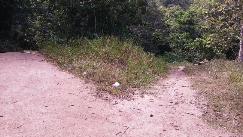 divergent forest path3jpg