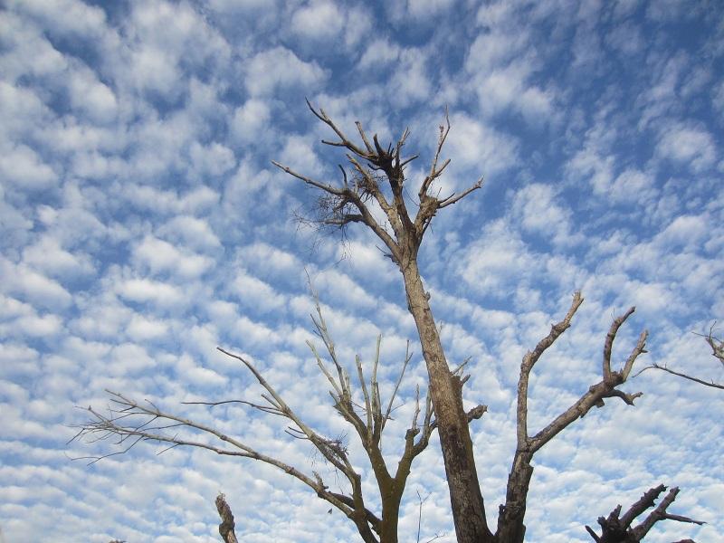 dead tree, sky