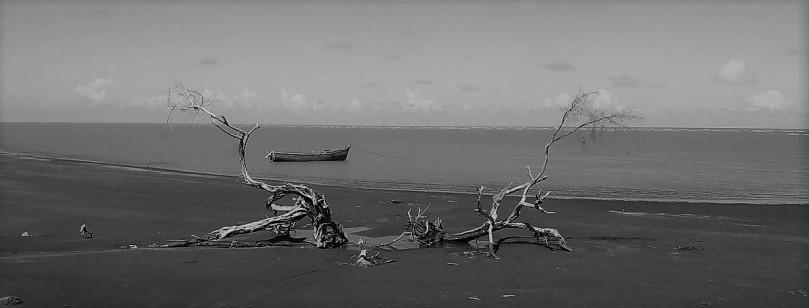 branch-boat-beachbw