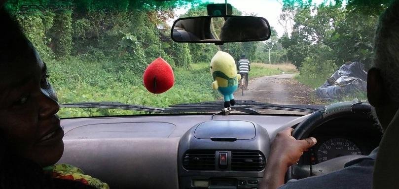 chasing the dasheen farmer.jpg