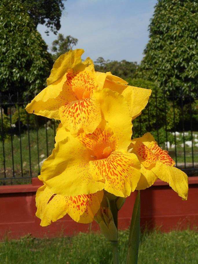 irie-flower