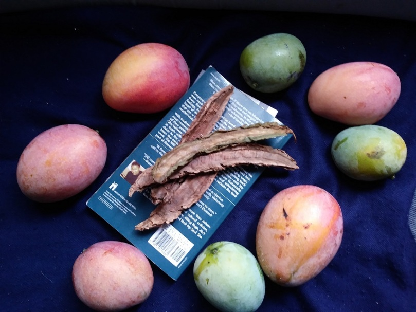 mangoes and dried wing beans. book. blue